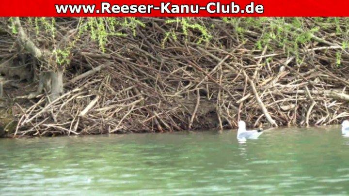 RKC - Geführte naturkundliche Rundfahrt Diersforther Waldsee